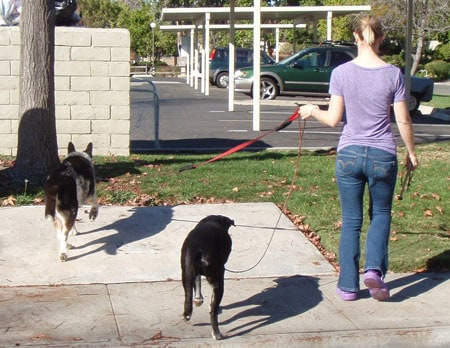Elbow To Ribs – How Your Body Mechanics Affect Fido's Leash Manners