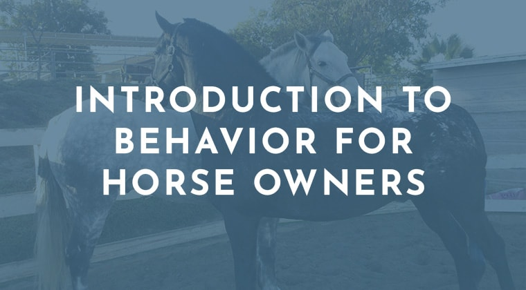 Introduction to Behavior for Horse Owners