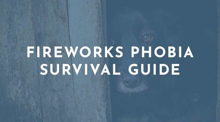 Fireworks Phobia Survival Guide for Dogs
