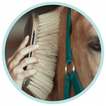 Human Hand Horse Brush Bond