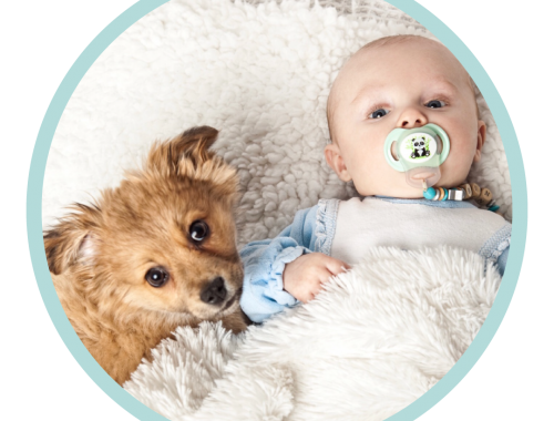 Dogs And Babies Baby Lieing Down Next To Dog