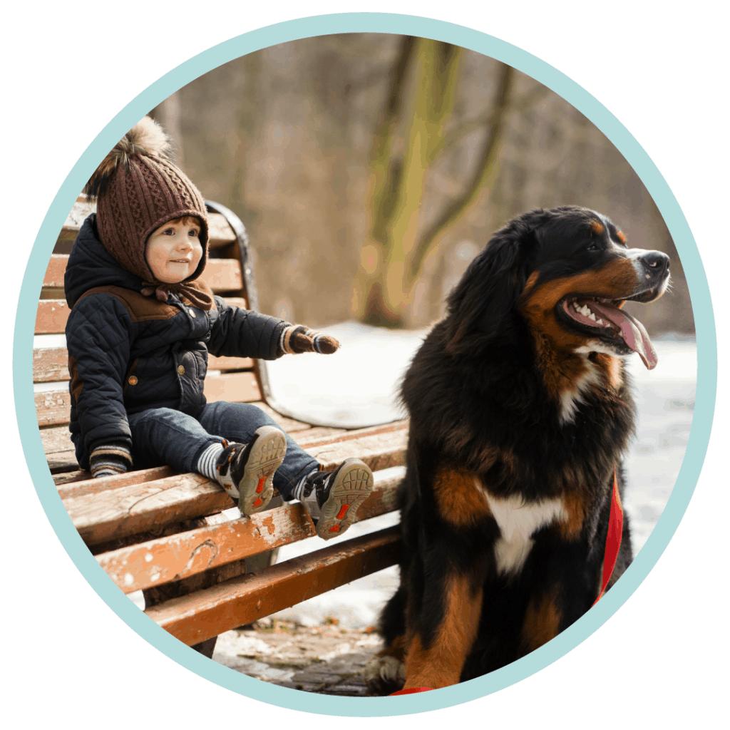 little boy big bernese mountain dog